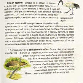энциклопедия птицы