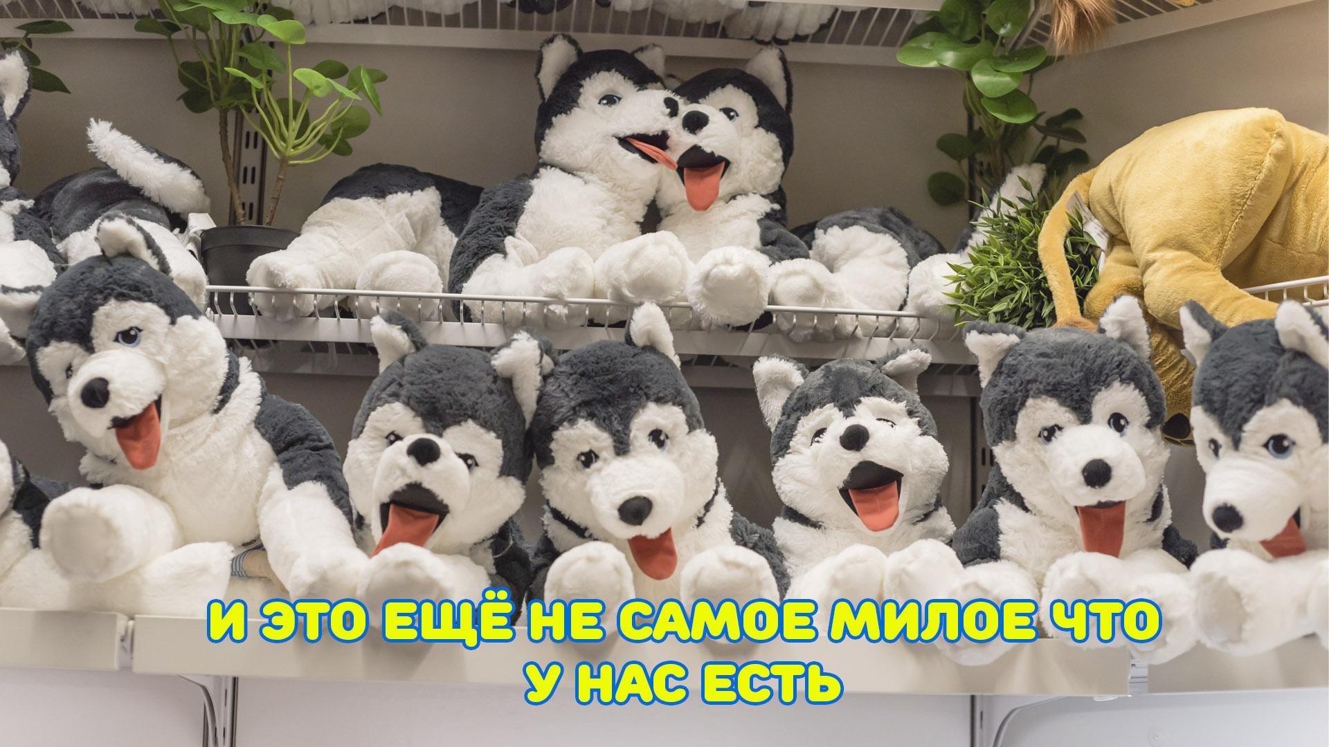 umka44.ru Развивающие игрушки